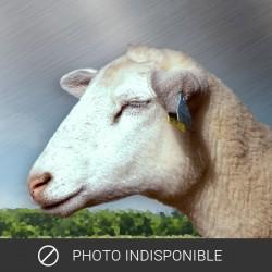 Farce d'agneau