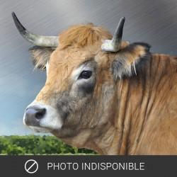 Haché nature bœuf Aubrac